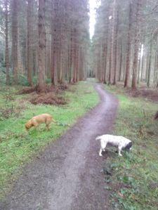hamsterley woods