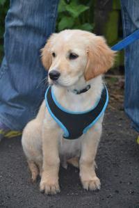 GOMR pup